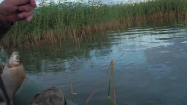 Horgász fogott hal, a halász halászat egy csónak a tó, a nád