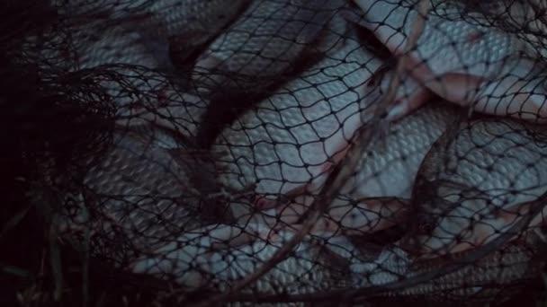 U ryb ulovených v rybářské tašky, skvělý úlovek