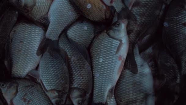 Horgásztáska, nagy fogás a kifogott halak