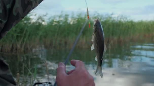 a halász azt mutatja a kamera fogott halat, és eltávolítja, a horog