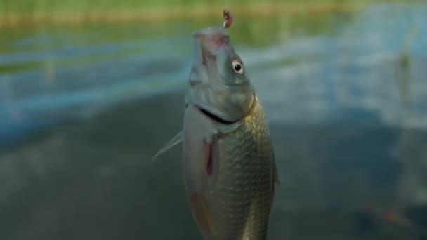 Detail: Ryba se otáčel na háku, pasti ryb