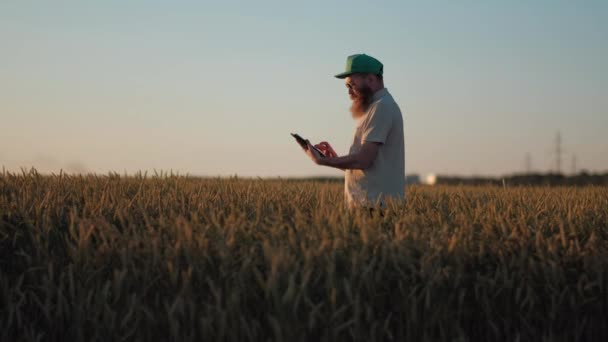 Senior Agronomist Walking in Wheat Field and Using a Digital Tablet For Business