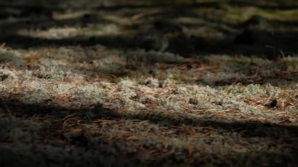 dívky v šatech na lesní mech