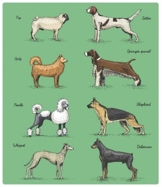 dog breeds engraved, hand drawn vector illustration in woodcut scratchboard style, vintage drawing species.