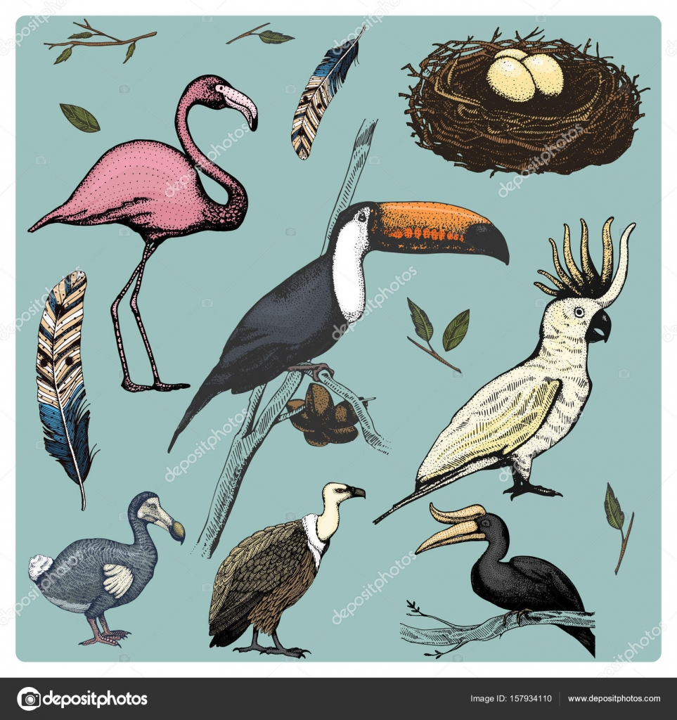 hand drawn vector realistic bird sketch graphic style set of
