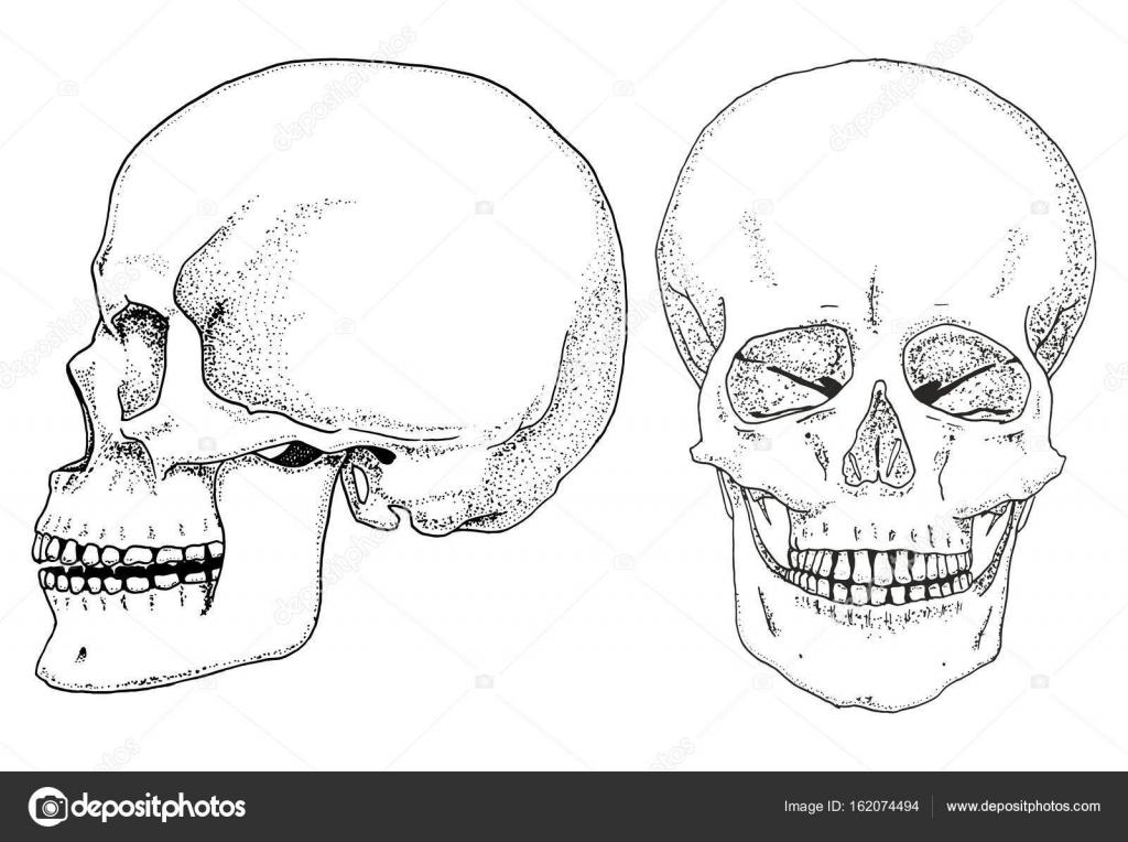 Biología humana, Ilustración de la anatomía. grabado a mano en viejo ...