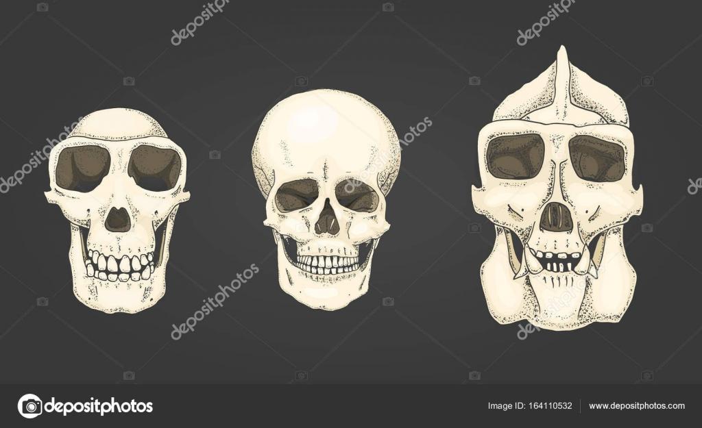 Humanos y el chimpancé, el gorila. Ilustración de anatomía y ...