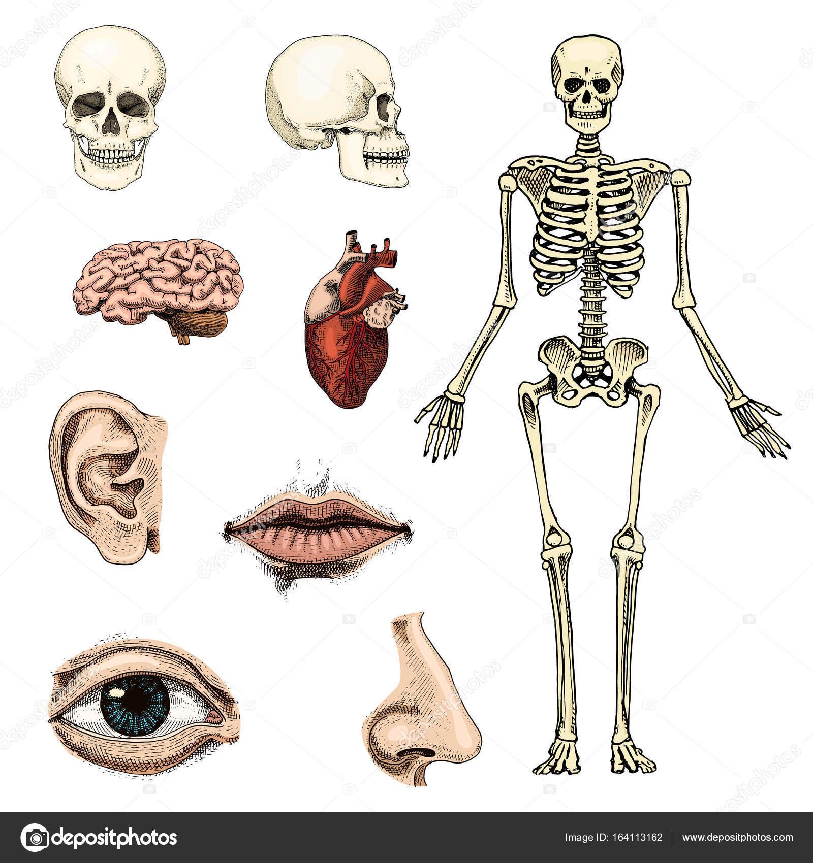 Ungewöhnlich Biologie Ecke Anatomie Bilder - Anatomie Von ...