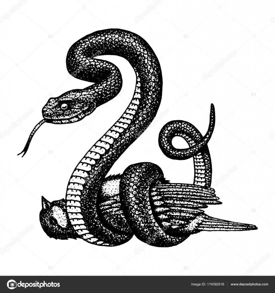 Serpiente víbora. serpiente cobra y pitón, anaconda o víbora, real ...