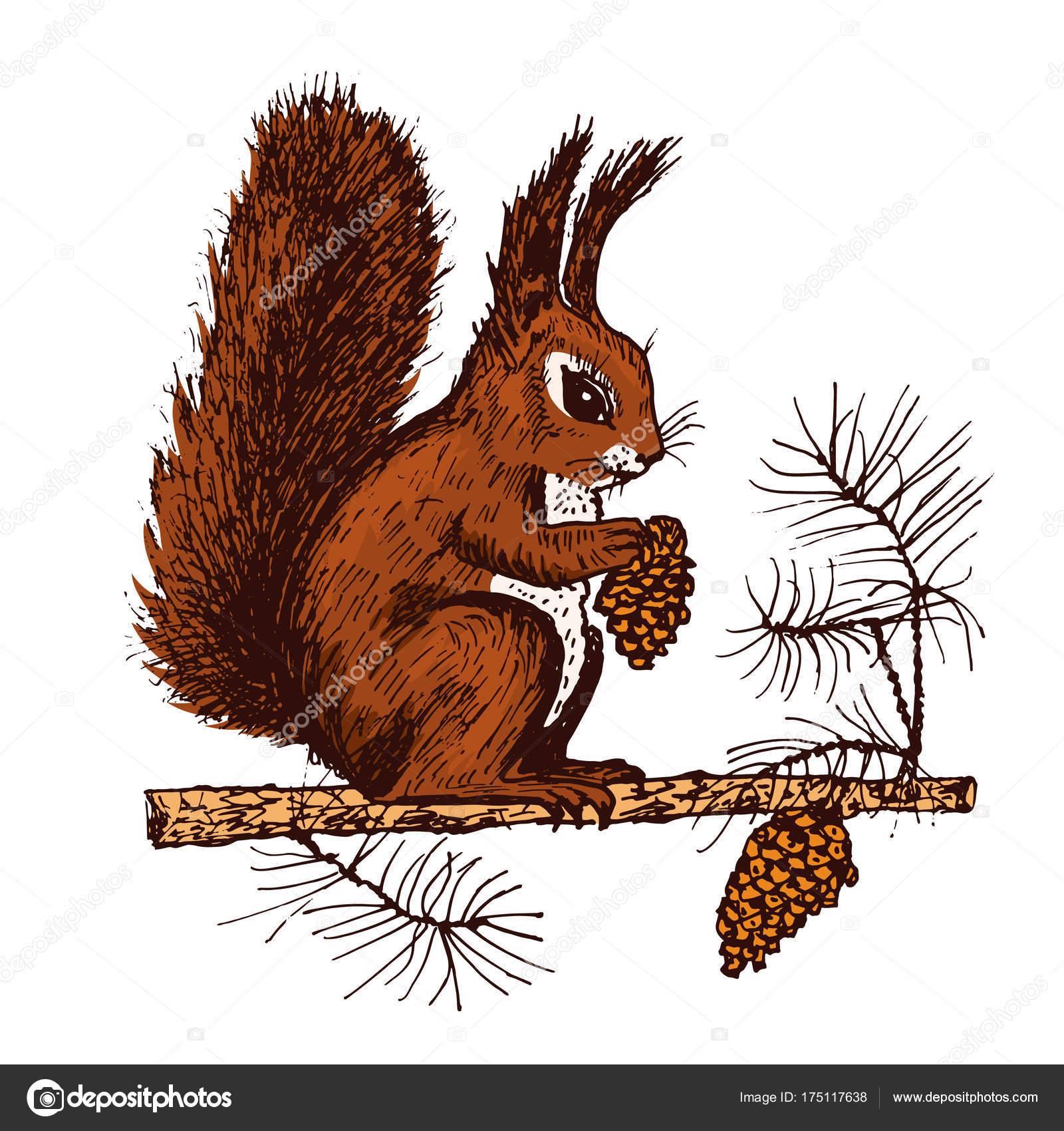 Weihnachten-Eichhörnchen und Tier mit Fir-Kegel in den Wald ...