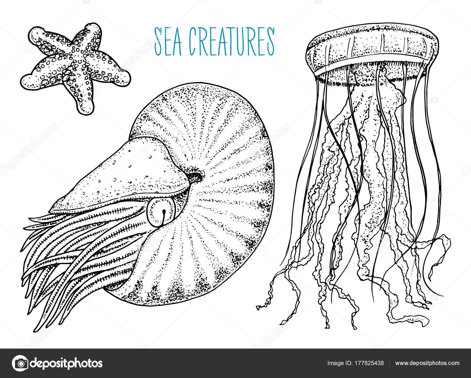 Meer Kreatur Nautilus Pompilius, Quallen und Seesterne. Schalentiere ...