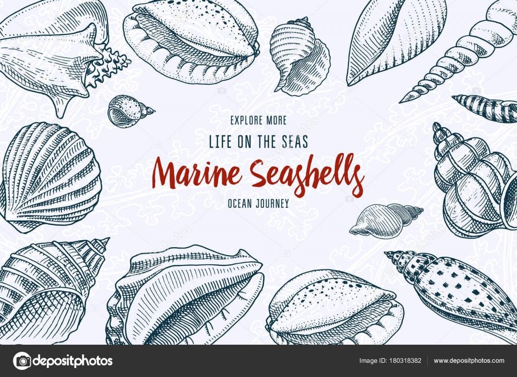 Muscheln Hintergrund oder Mollusken verschiedene Formen ...