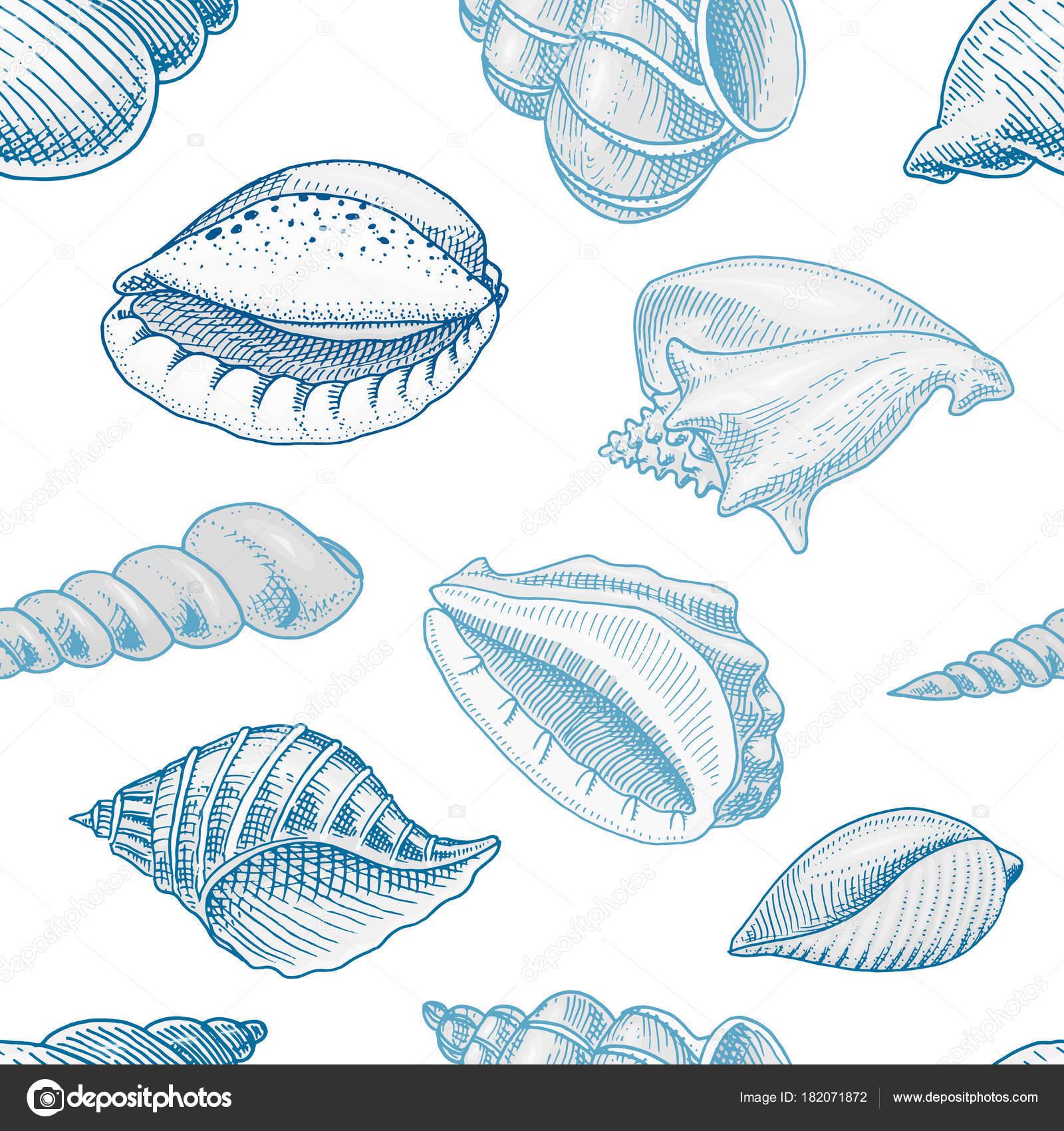patrón transparente conchas o moluscos diferentes formas. criatura ...