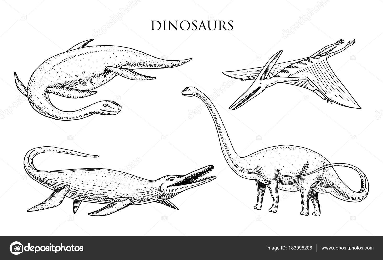 Imágenes: apatosaurus para colorear | Los dinosaurios Elasmosaurus