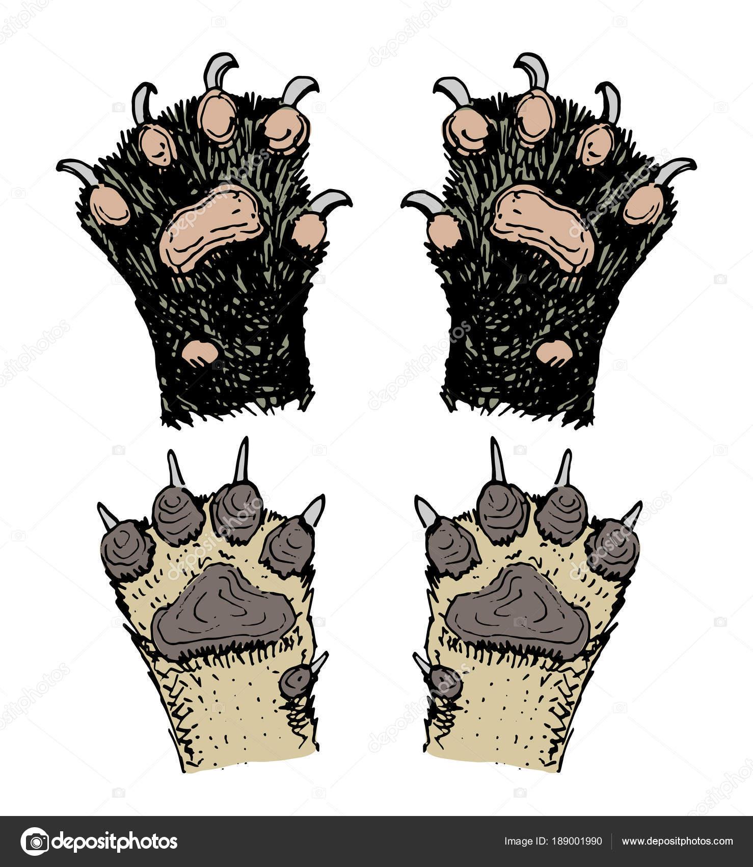 Pfoten von Tieren oder Fußabdrücke und Tierwelt. Hände von Hund, Bär ...