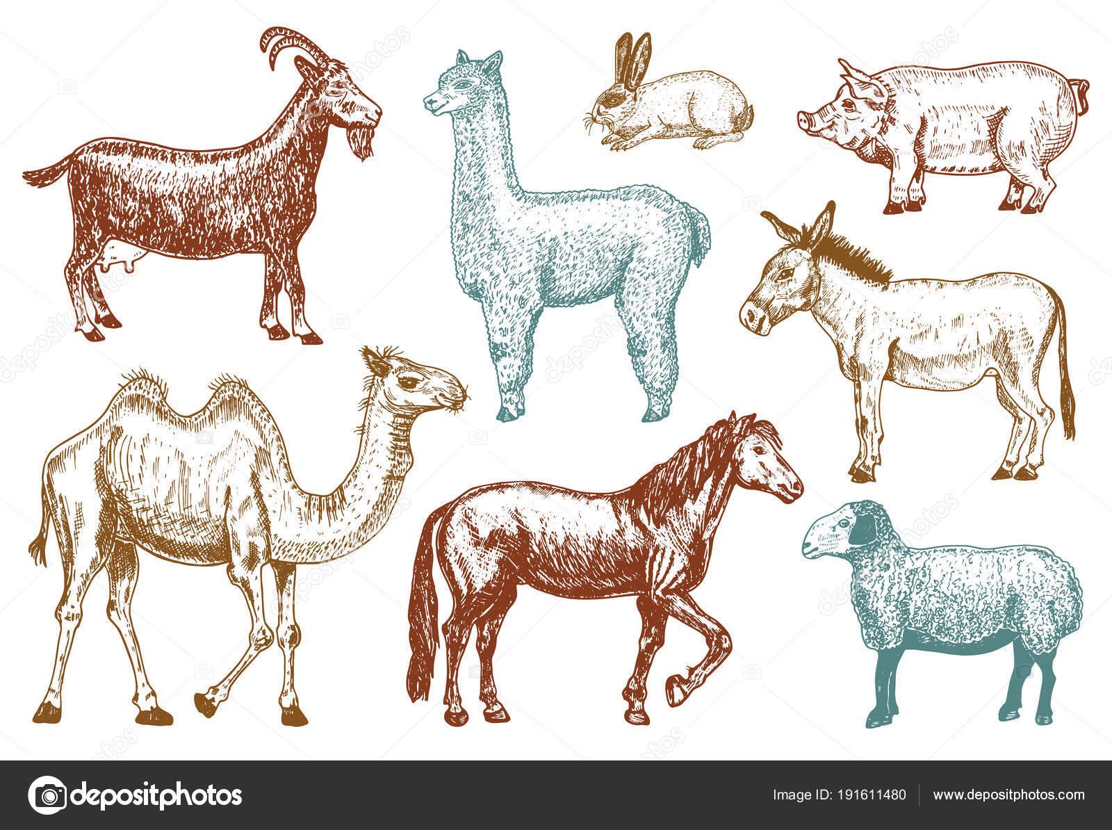 Farm Cute Animal Big Set Vector Illustration Camel Horse Goat Pig