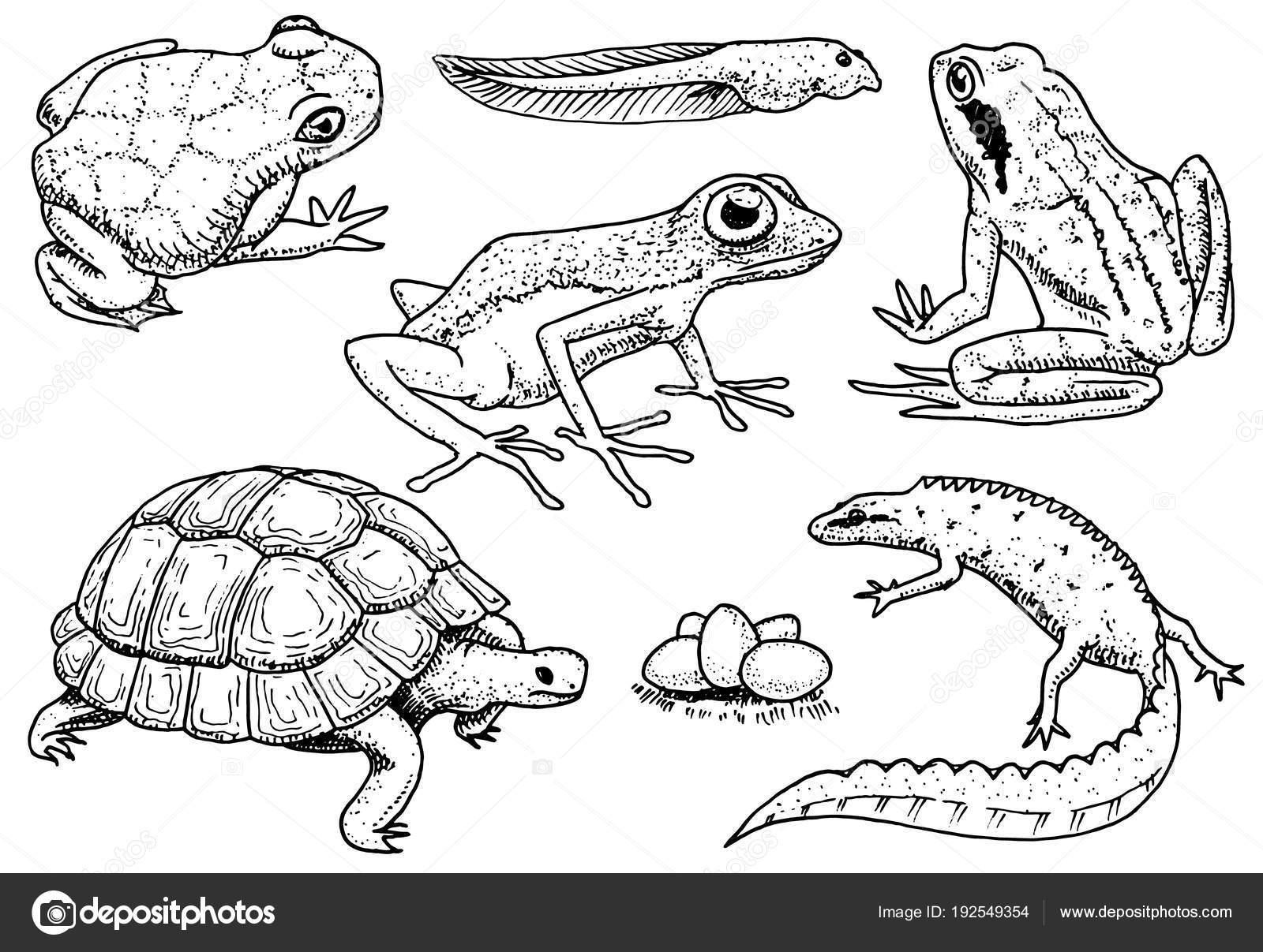 conjunto de répteis e anfíbios animal de estimação e animais