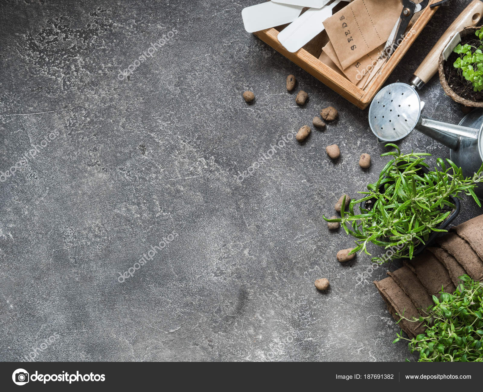 52705414601a Seedlings Herbs Basil Rosemary Thyme Various Garden Tools Gray Background —  Stock Photo