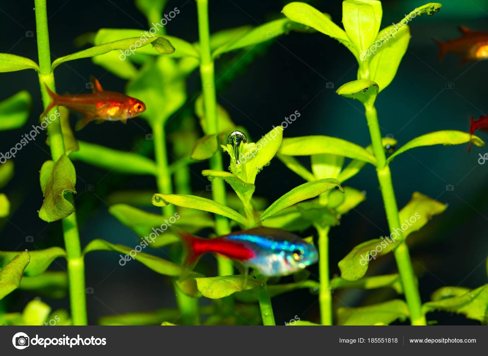 bubbles oxygen leaves tropical fresh water aquarium plants stock