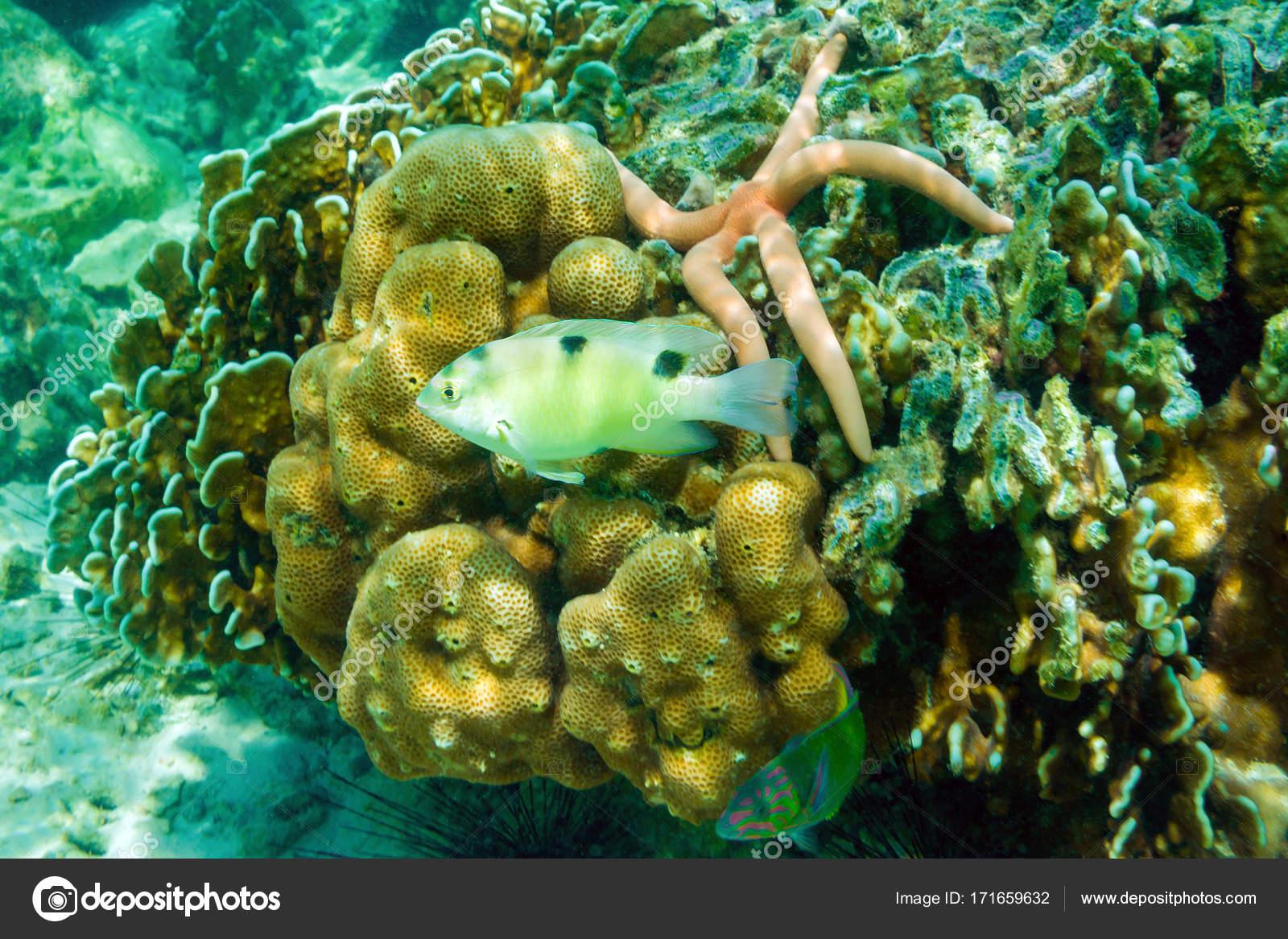 Poissons, étoiles de mer, oursins et coraux sur Banana beach, île de ...