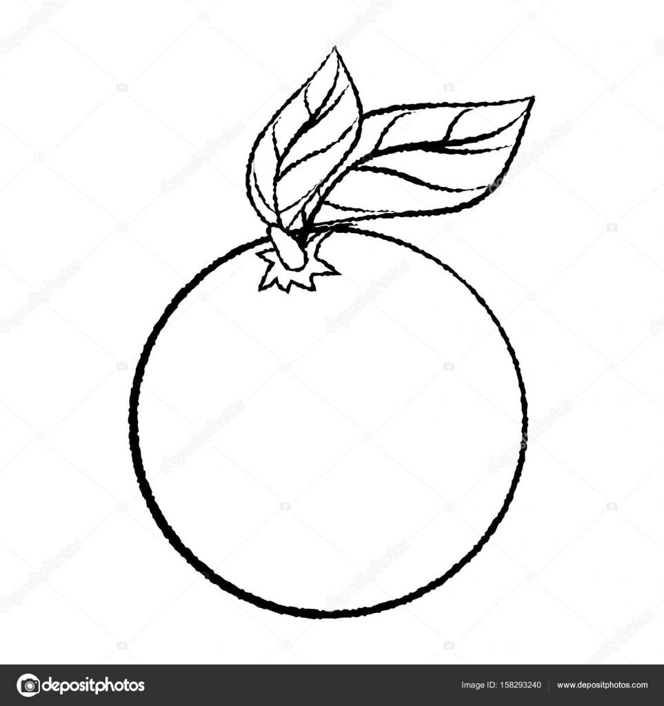Line Drawing Of Orange With Leave Simple Line Vector Stock Vector