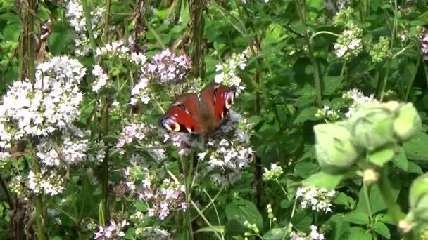 pillangó virág ül