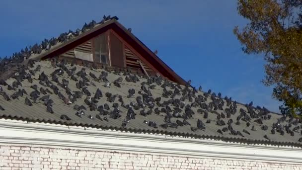 Pigeons sitting on the roof