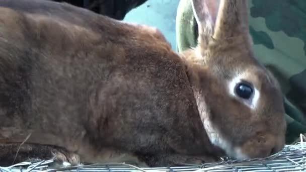 Brauner Hase sitzend in einem Käfig