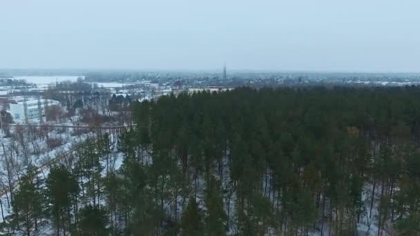 Přes zimu jehličnatého lesa