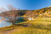 fogliame nei boschi intorno a Lago Resia Alpi italiane
