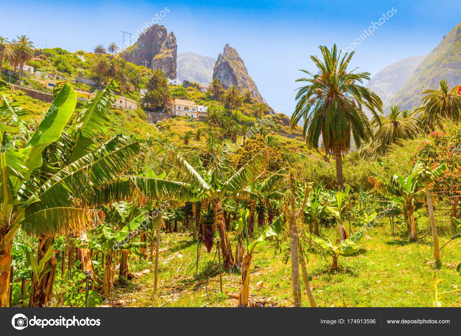 Gomera Insel Innenraum panorama — Stockfoto © markpittimages.gmail ...