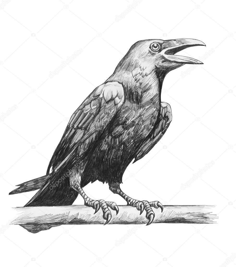 Ołówkiem Rysunek Kruka Zdjęcie Stockowe Artkamalov 126890162