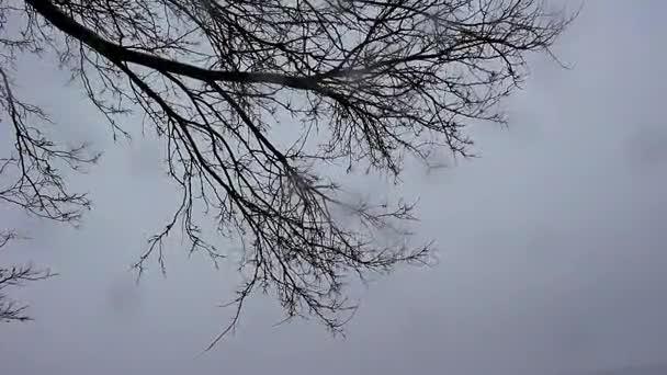 A nyáj köröznek a fák felett seregélyek
