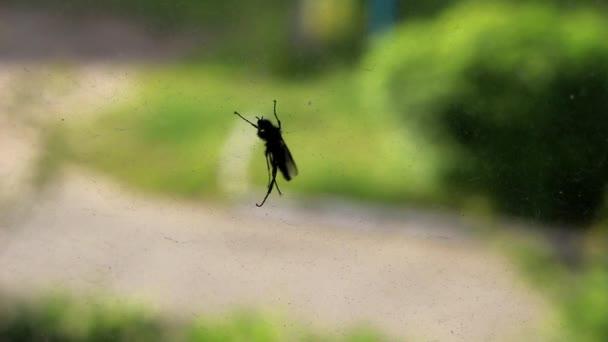 Black beetle on the window