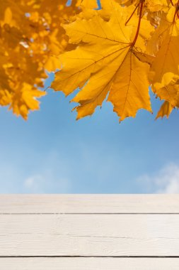 Yellow Autumn Leaves  with white wooden table for display your products