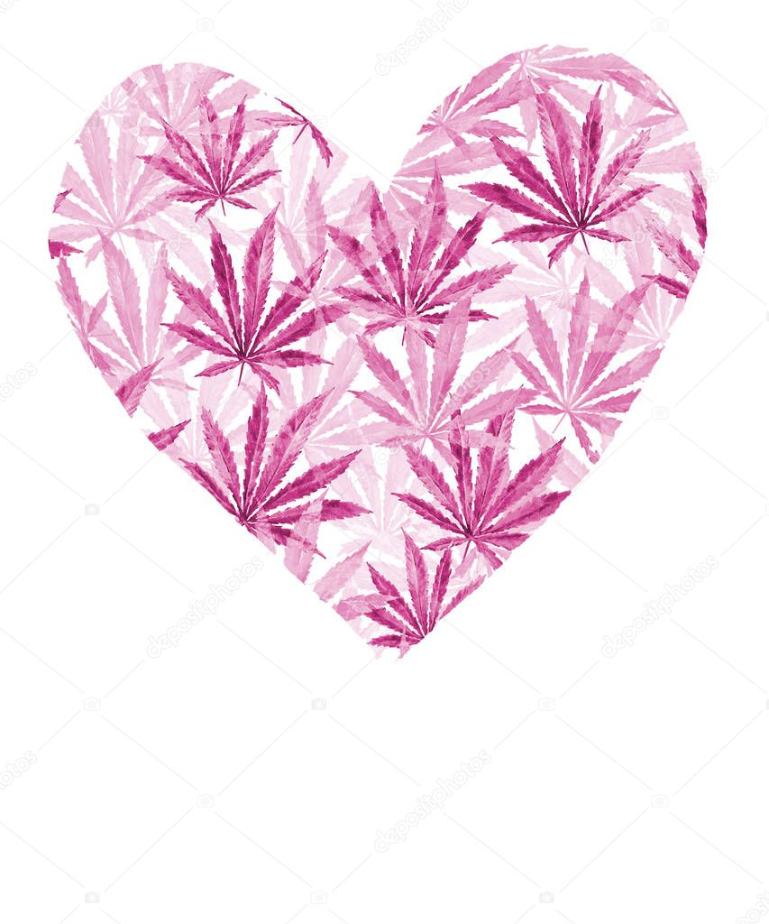 Heart of Pink cannabis sativa leaves