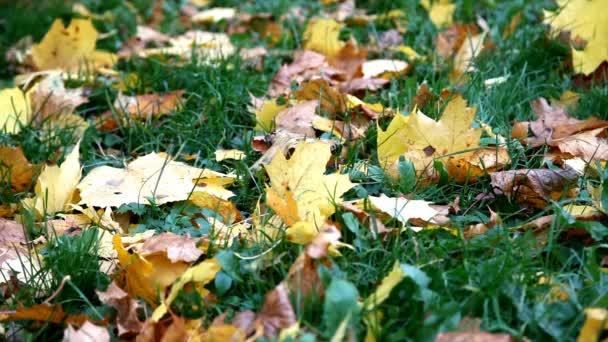 podzimní listí na trávě