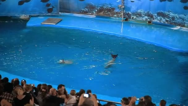 Barcelona Zoo Summer Stock Video C Mosterbu 141413878