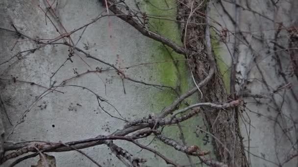 Rostliny na stěně kontejneru