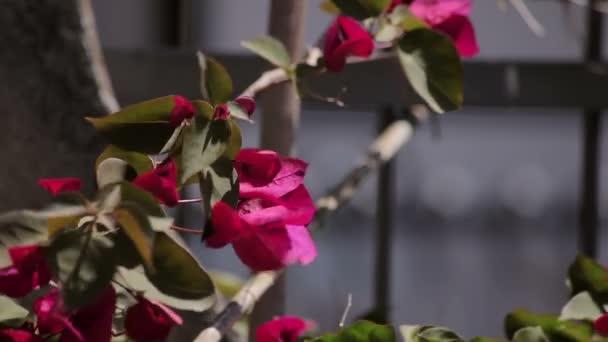 virágok a kerítés
