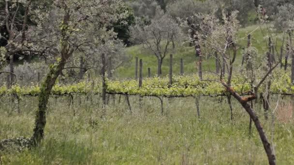 Hroznové farma panorama