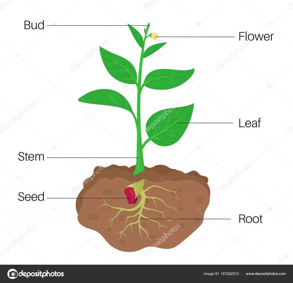 Partes del diagrama de planta — Archivo Imágenes Vectoriales ...