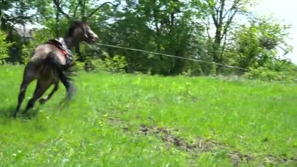 Hnědý kůň běžící na kruh na trávě