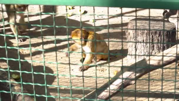 Cute monkey in the cage in the zoo