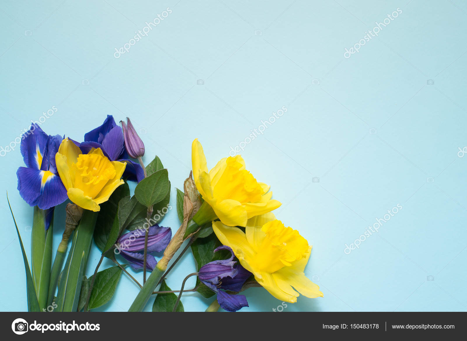 Fiori Su Sfondo Blu Foto Stock Ikerby36gmailcom 150483178