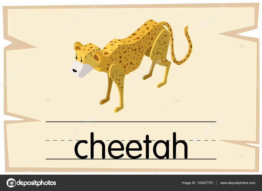 Wordcard template for word cheetah — Stock Vector © brgfx #145427751
