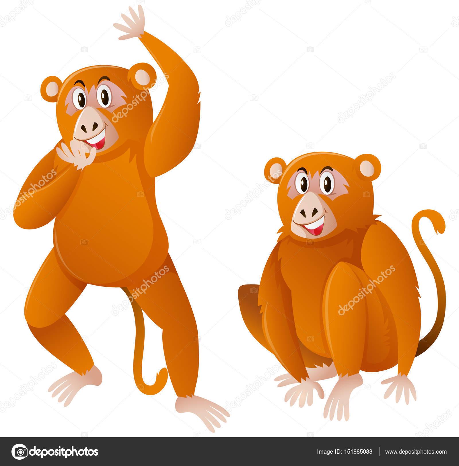 Imágenes Changos Bebes Animados Dos Monos Con Piel Marrón