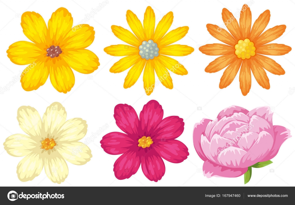 Different Kinds Of Flowers In Yellow And Pink Stock Vector Brgfx