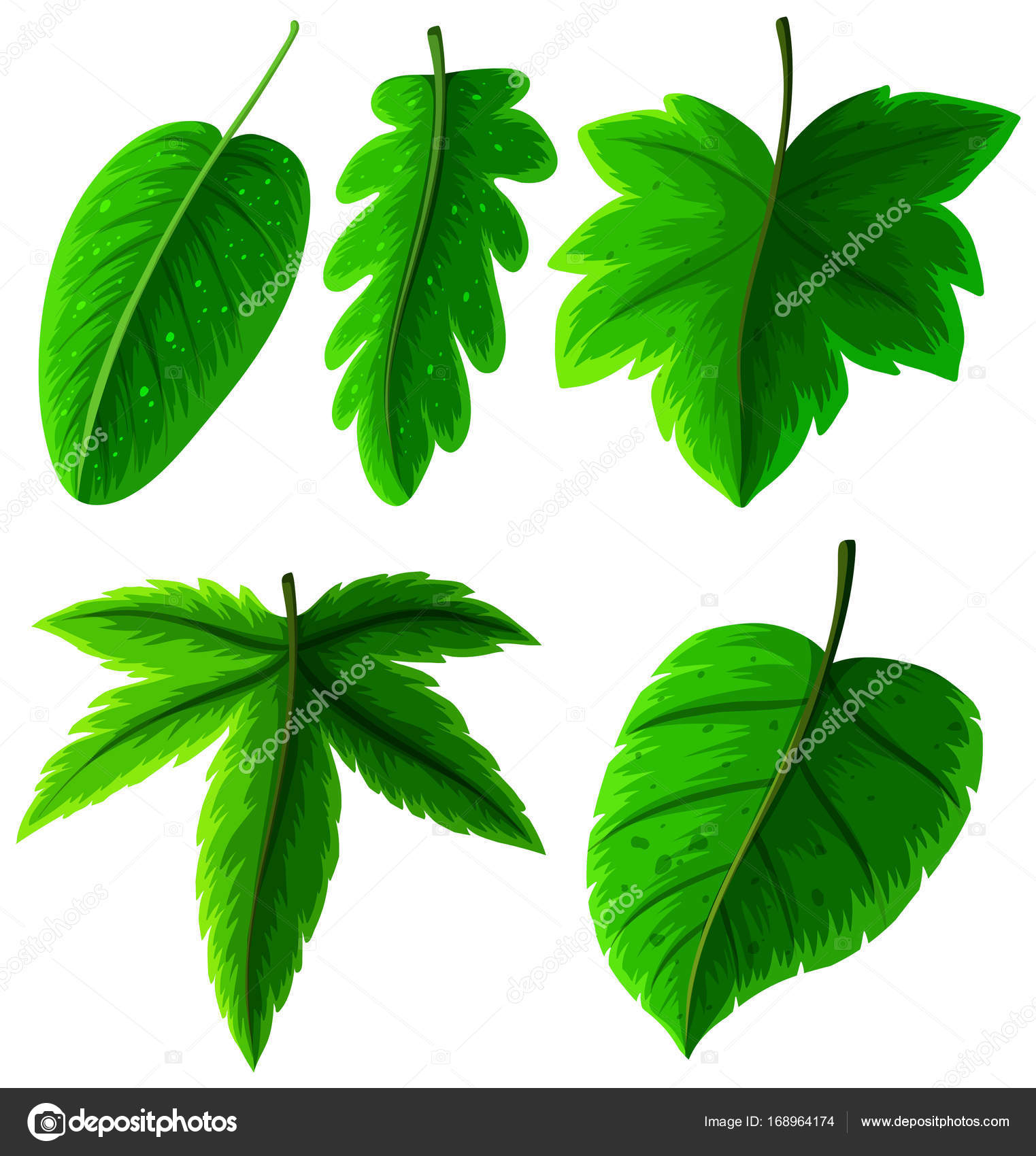 Different Types Of Green Leaves On White Stock Vector Brgfx
