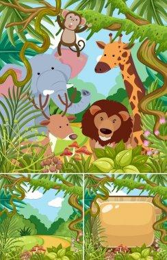 Nature scenes with wild animals in jungle